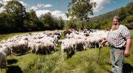 Zootecnia, il Presidente della Regione tende la mano agli allevatori