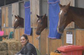 Fiera Cavalli, presentata in Sicilia la prossima edizione