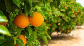 Sicilia, in arrivo 50 milioni per gli agricoltori