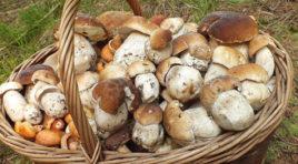 Due giorni dedicati ai funghi ed ai tartufi di monte Inici, Castellamnare