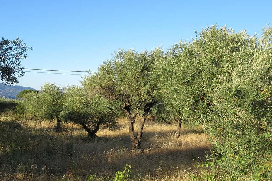 Olio, produzione in perdita a Palermo e Trapani
