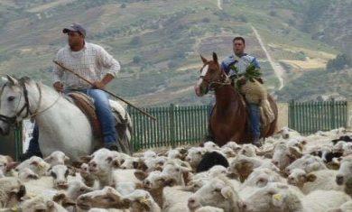 Tosare le pecore, visitare una chiesa, scoprire una bottega. Al via Le Vie dei Tesori